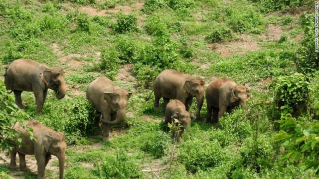 170713143222-elephant-conservation-center-laos-exlarge-169